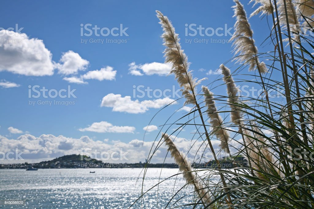 Waitemata Harbour on a sunny summer afternoon stock photo