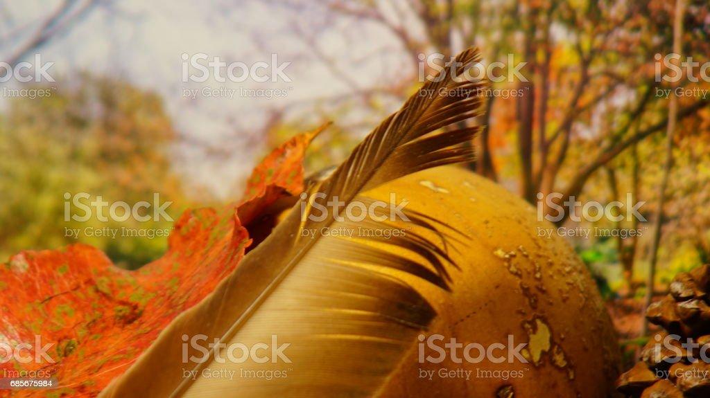 秋を待っています。 ロイヤリティフリーストックフォト