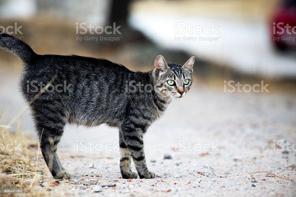 Waiting Cat stock photo