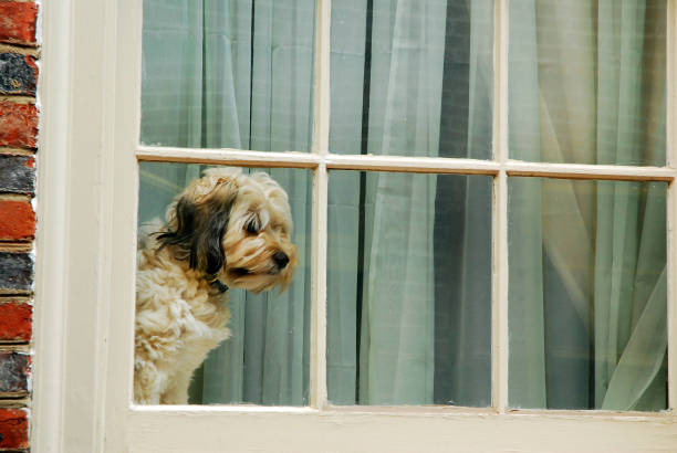 Warten Doggie – Foto