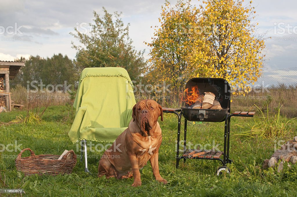 Waiting for a Picnic Meal royalty-free stock photo