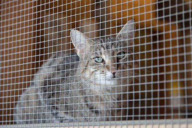 waiting for adoption - cage animal nuit photos et images de collection