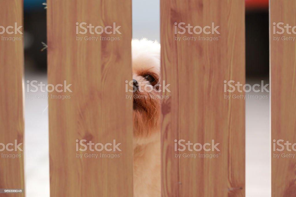 abstract of dog leg behind the door