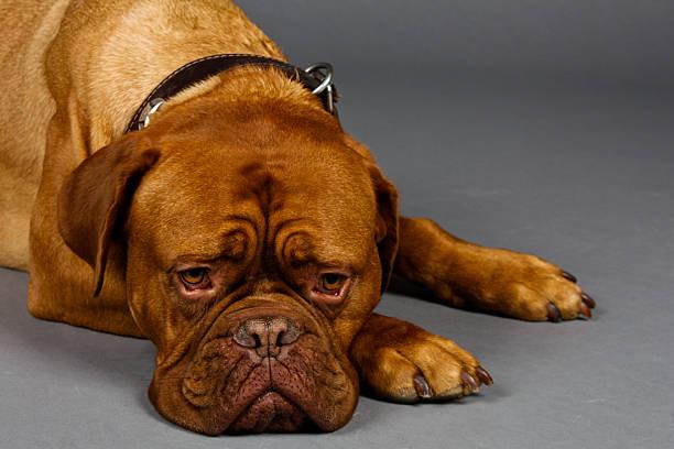 Waiting for Dogot II stock photo