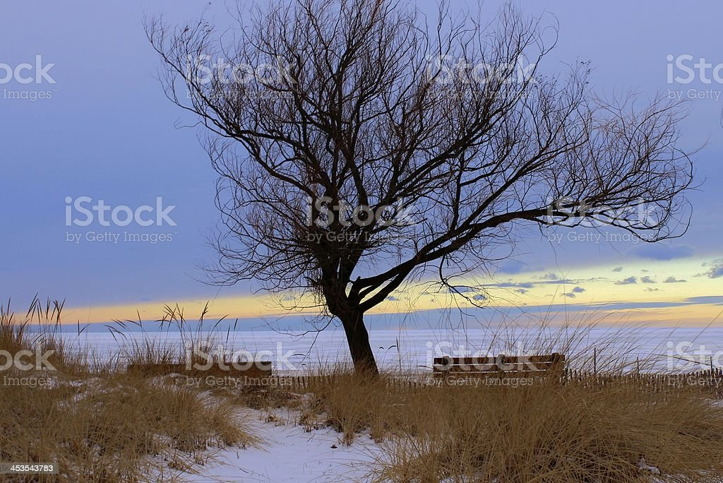 Waiting for Summer royalty-free stock photo