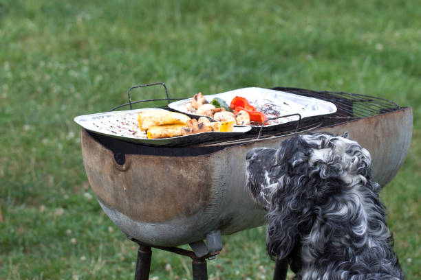 waiting for the barbecue, waiting for lunch – zdjęcie