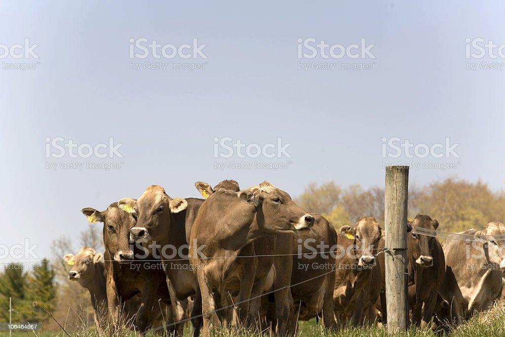 Warten auf die Cowherd – Foto