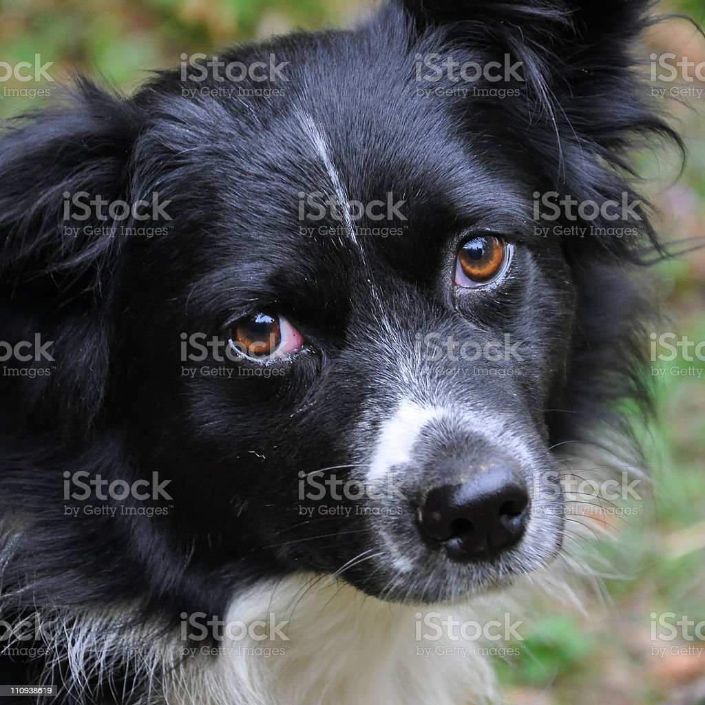 Waiting for the friend royalty-free stock photo