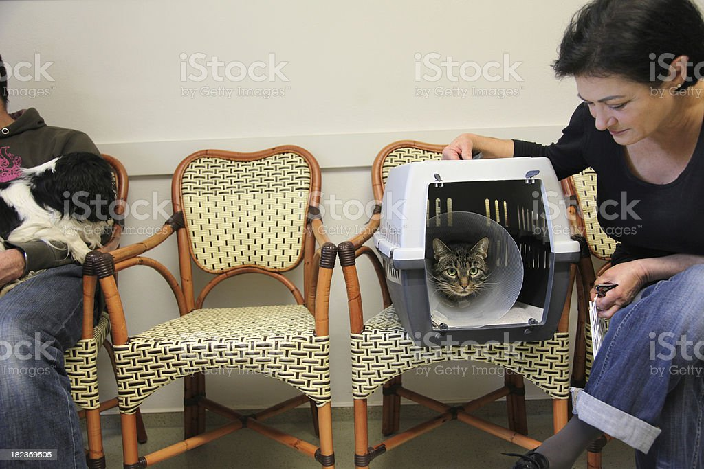 Waiting for the vet royalty-free stock photo