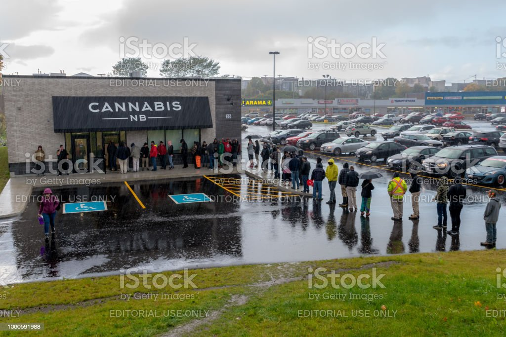 Waiting In The Rain For Cannabis stock photo