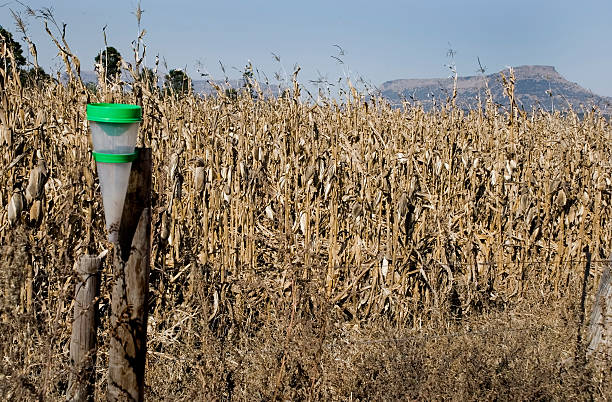 waiting on rain - rain gauge stock photos and pictures