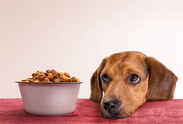 à espera - dog food imagens e fotografias de stock
