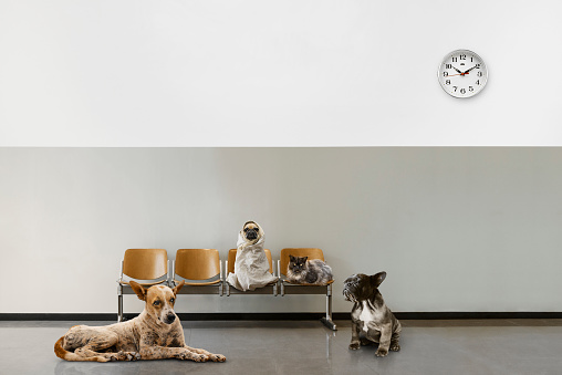 waiting room with chairs, clock and group of sitting animals