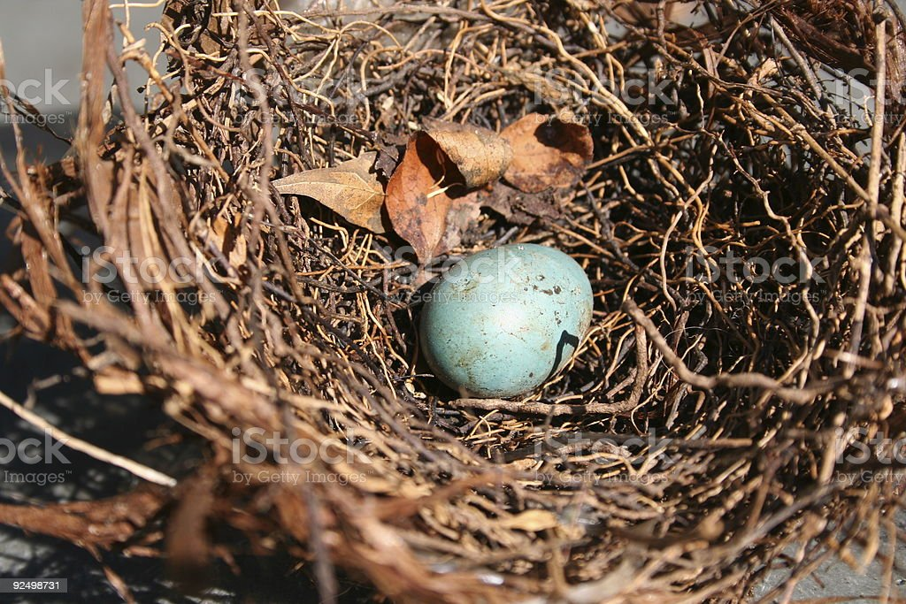 Waiting to hatch royalty-free stock photo