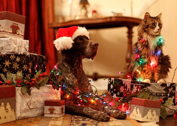 warten zu öffnen geschenke. - katze weihnachten stock-fotos und bilder