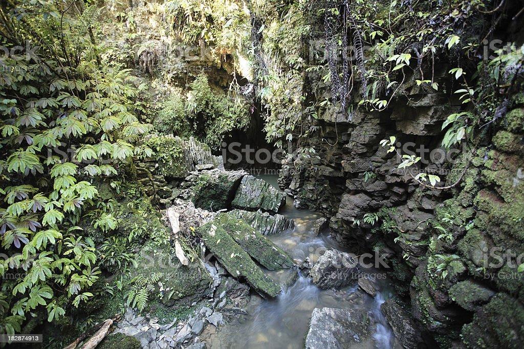 Waitomo rainforest stream emerging from limestone cave stock photo