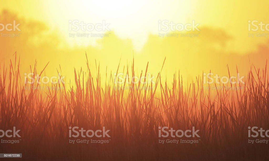 Wakarusa Wetlands Sunrise stock photo