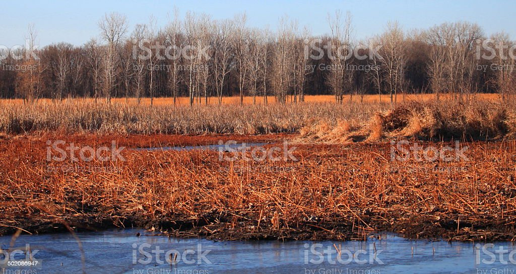 Wakarusa Wetlands Winter stock photo