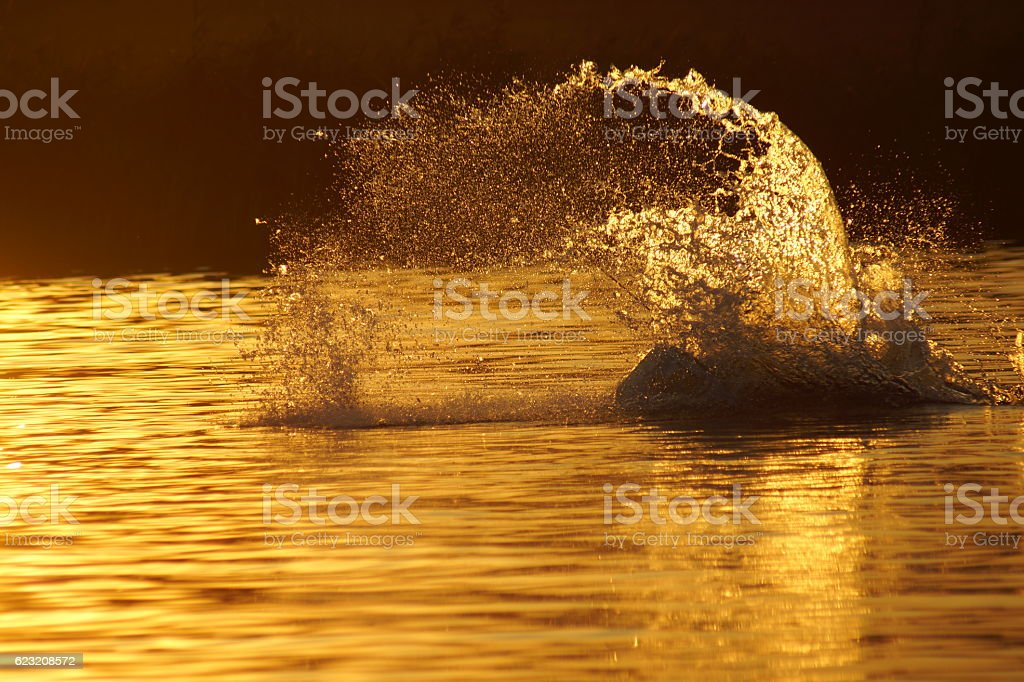 wake boards -water stock photo