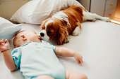 istock wake up little human i wanna play 1059601690