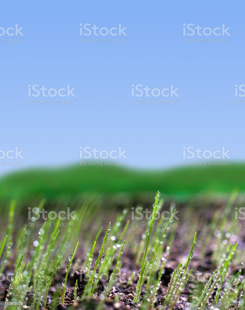Waking Nature royalty-free stock photo