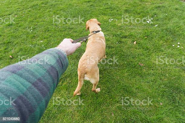 Waking the dog picture id521040680?b=1&k=6&m=521040680&s=612x612&h=rbwi40f7fgcv5igv3n17ok0enwjqgkmvyb81ncjrrho=