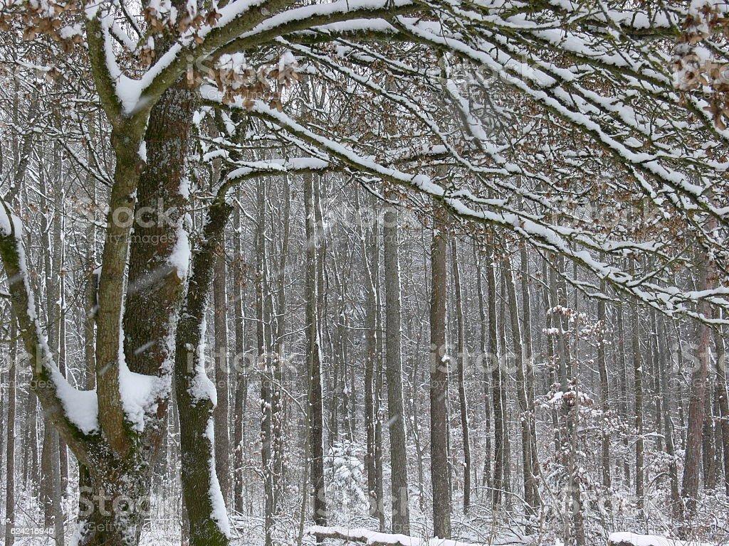 Wald im Winter stock photo