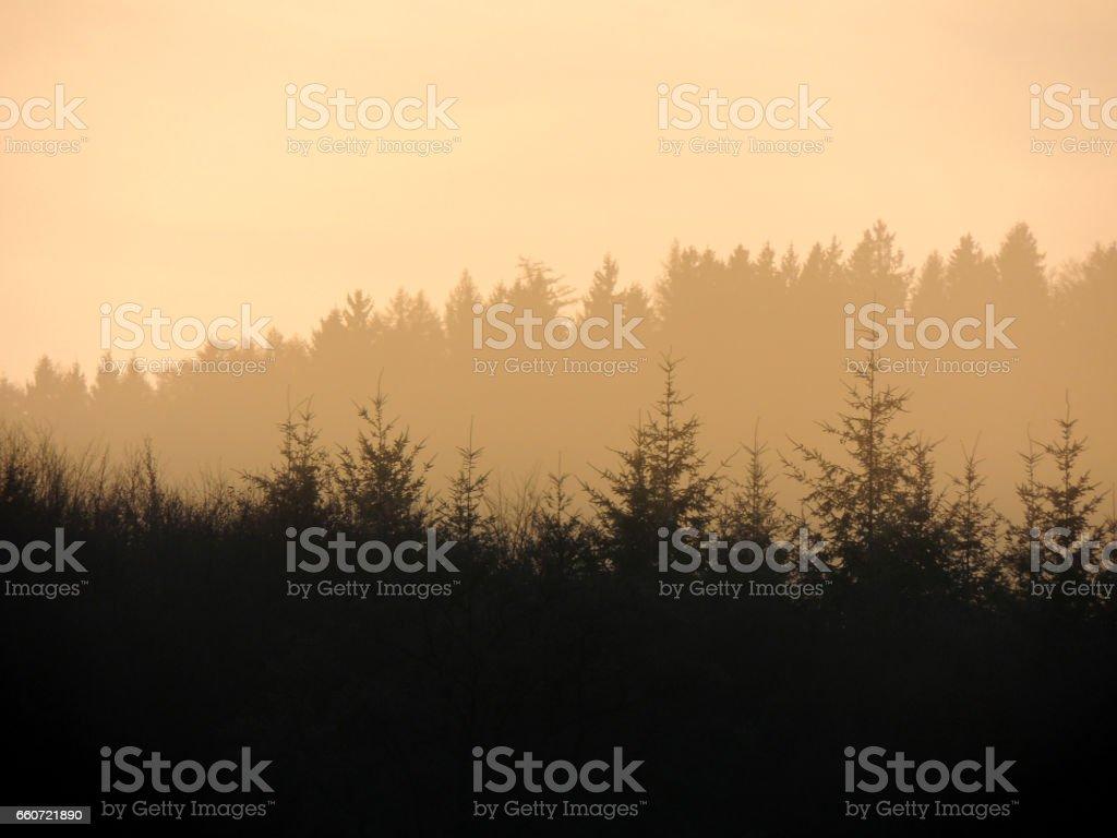 Wald-Silhouette – Foto