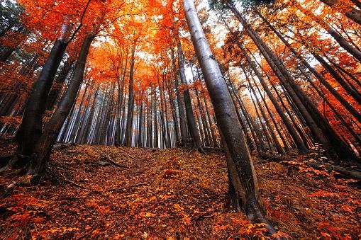 Waldlandschaft im Harz