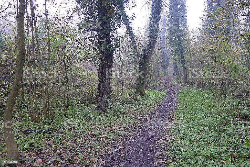 Waldpfad im Herbst stock photo