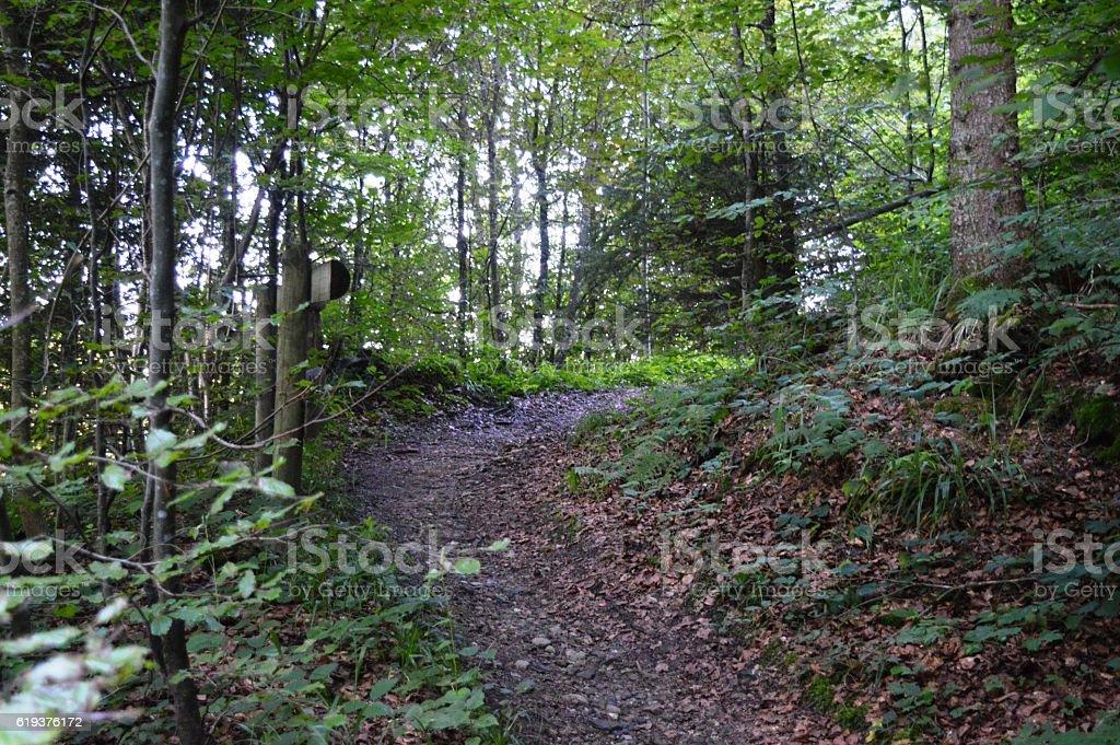 Waldweg in Bayern stock photo