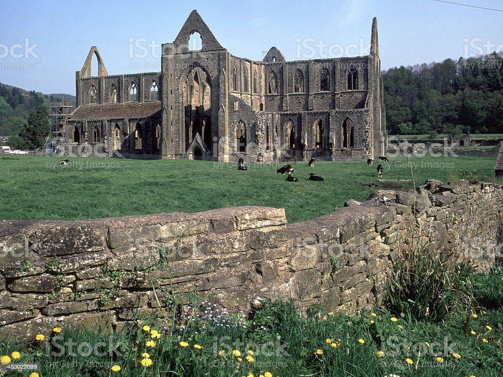 Wales, Wye Valley, Tintern Abbey stock photo