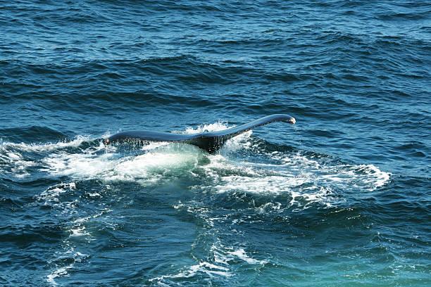 Walfluke – Foto