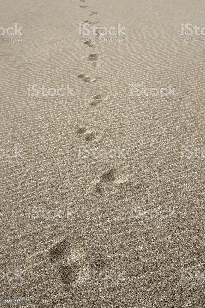 walk alone royalty-free stock photo