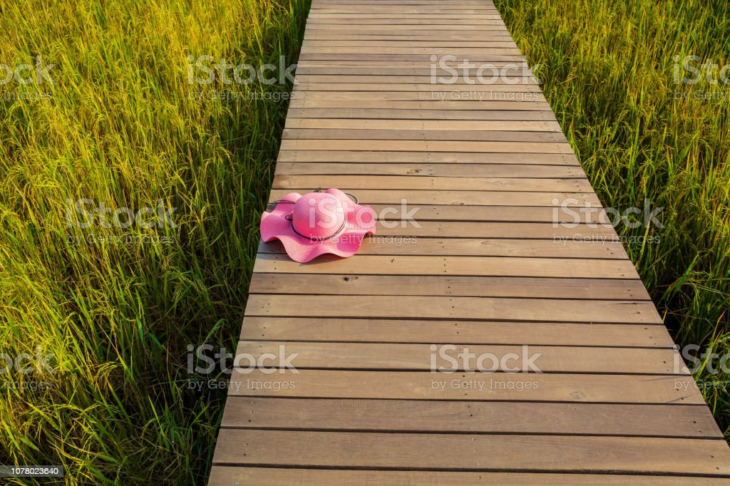Walk between paddy field and pink hat. stock photo