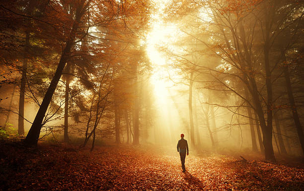 Walk in breathtaking light of the autumn forest Male hiker walking into the bright gold rays of light in the autumn forest, landscape shot with amazing dramatic lighting mood tranquil scene stock pictures, royalty-free photos & images