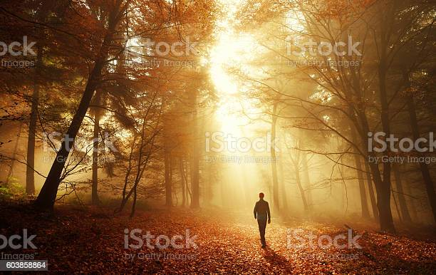 Photo of Walk in breathtaking light of the autumn forest