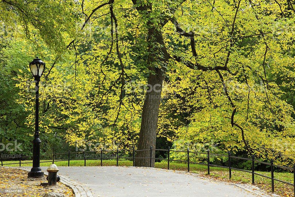 Walk in Central Park stock photo