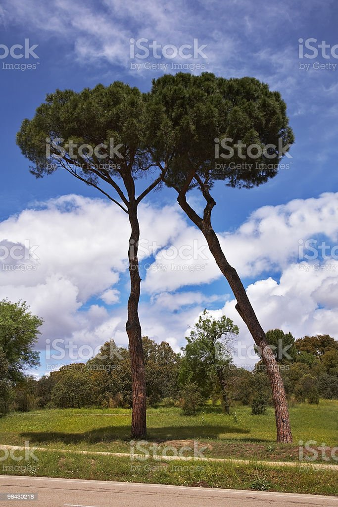 Cammina in magnifico parco foto stock royalty-free
