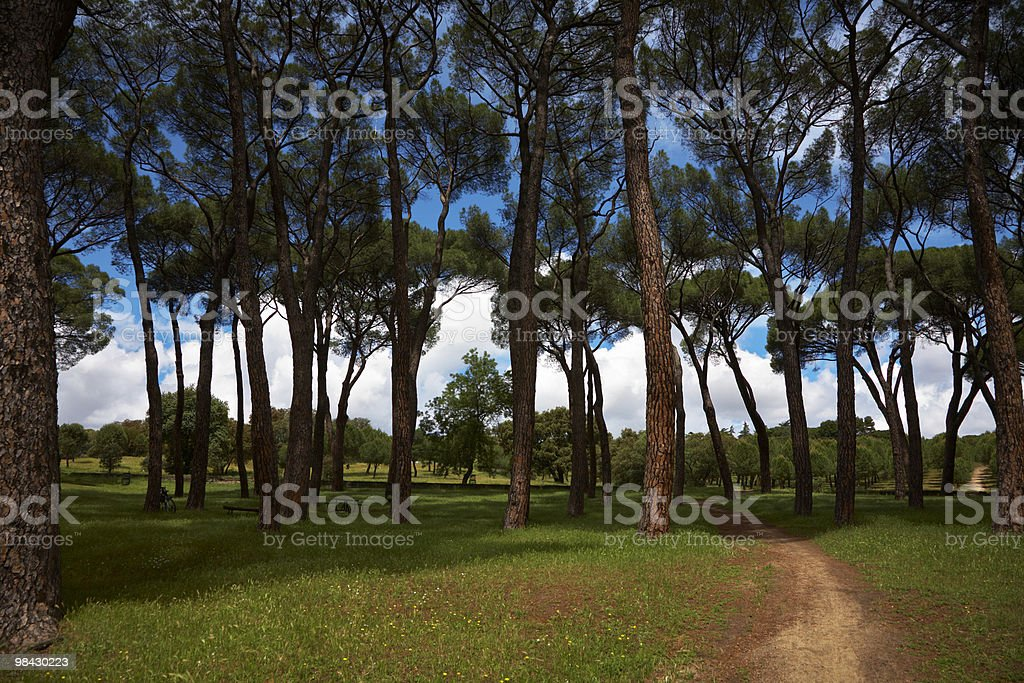 Walk in magnificent park royalty-free stock photo