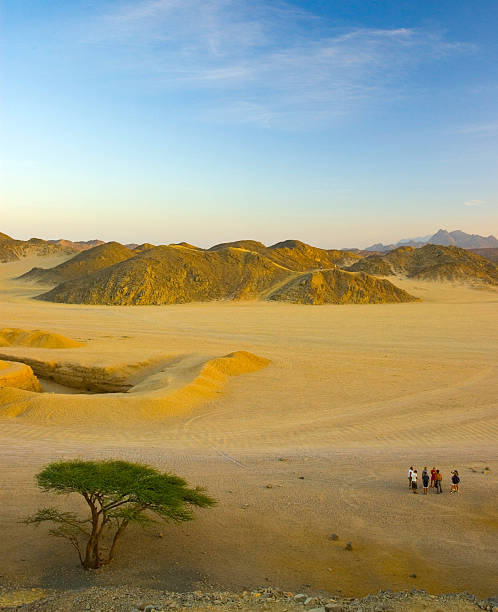 Walk in the desert stock photo