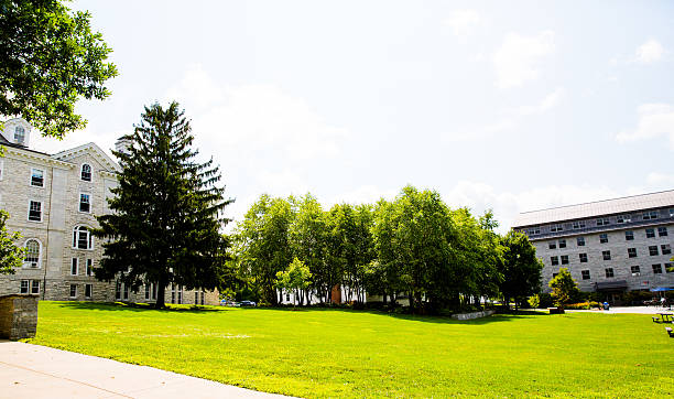 walk in the green area stock photo