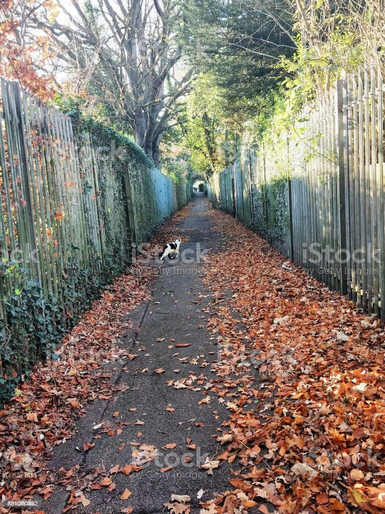 A walk in the park in Autumn stock photo