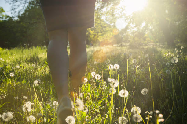 Walk in the park. Girl walking in the park field in sunset. Bright dandelions in the park afternoon sunlight. Sunset in the park. sun shining through dresses stock pictures, royalty-free photos & images