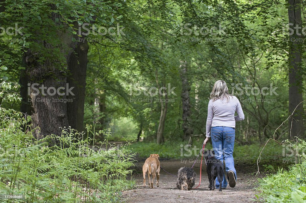 walk in the woods royalty-free stock photo