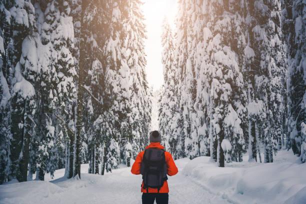 겨울 숲 산책 - 핀란드 뉴스 사진 이미지