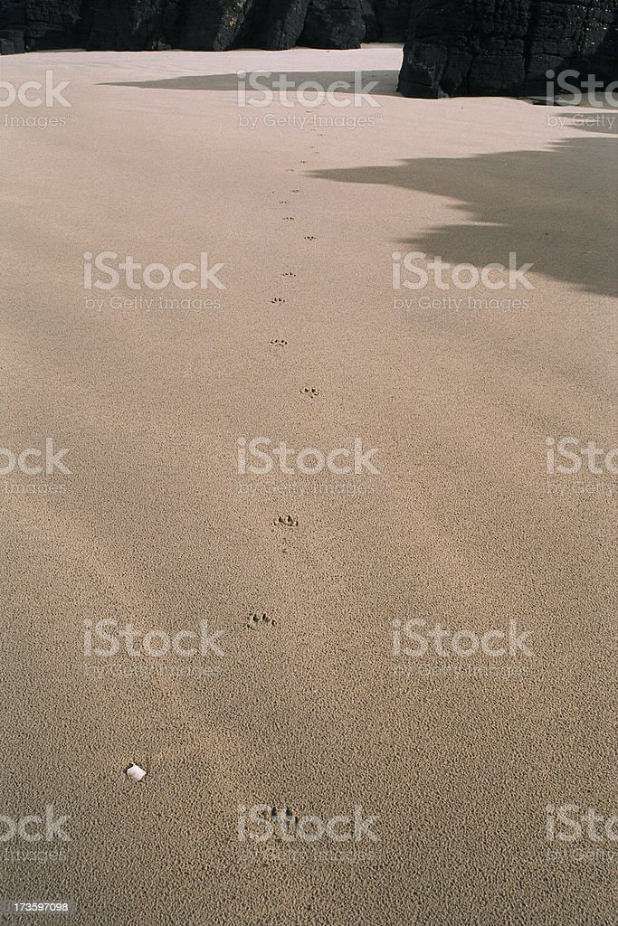 Walk On The Beach royalty-free stock photo