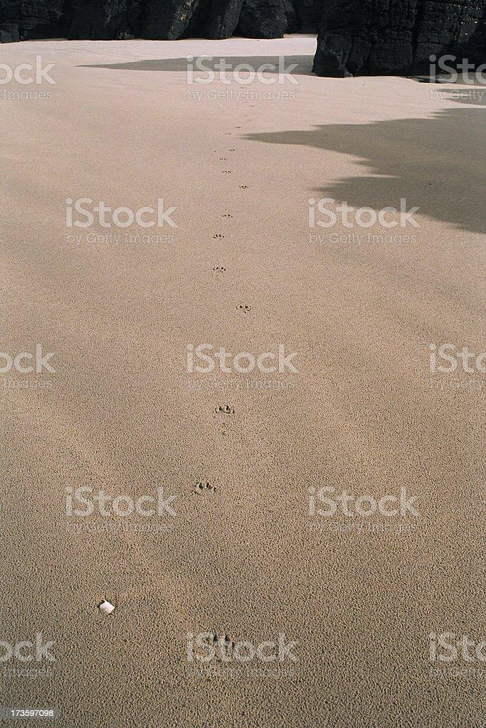 Walk On The Beach stock photo