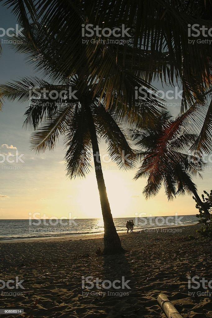 Walk on the coconut tree beach