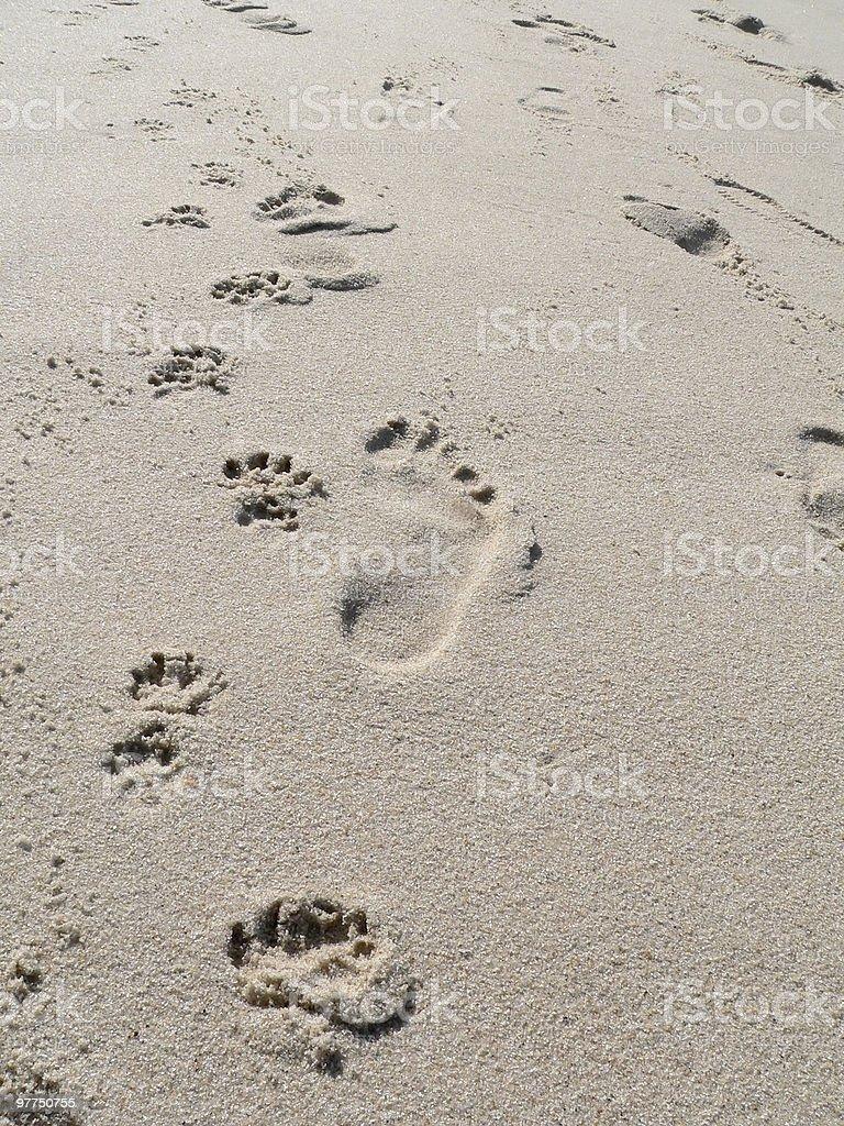 walk the dog beach scenery stock photo
